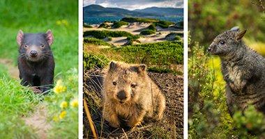 """""""Tasmania - Hòn đảo thiên đường trên mặt đất"""""""