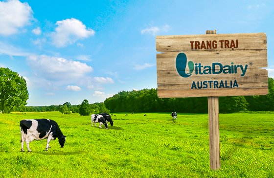 VitaDairy Sở Hữu Trang Trại Tại Đảo Tasmania - Vùng Đất Sạch Nhất Thế Giới